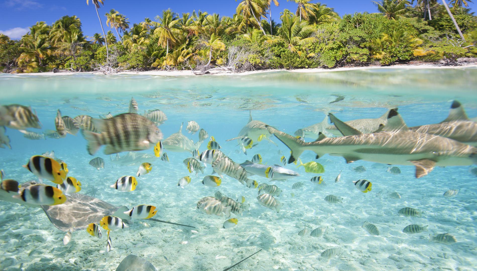 Une sortie snorkeling au Lagoonarium – photo2